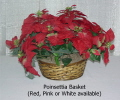 Rental store for POINSETTIA, PINK in State College PA