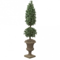 Rental store for 6  LAUREL CONE BALL TOPIARY, POTTED in State College PA