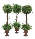 Rental store for TABLETOP TOPIARY, POTTED - 28 in State College PA